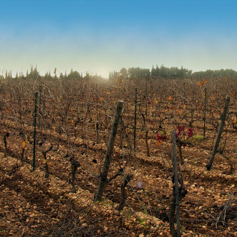 Vignoble Terre des Chardons