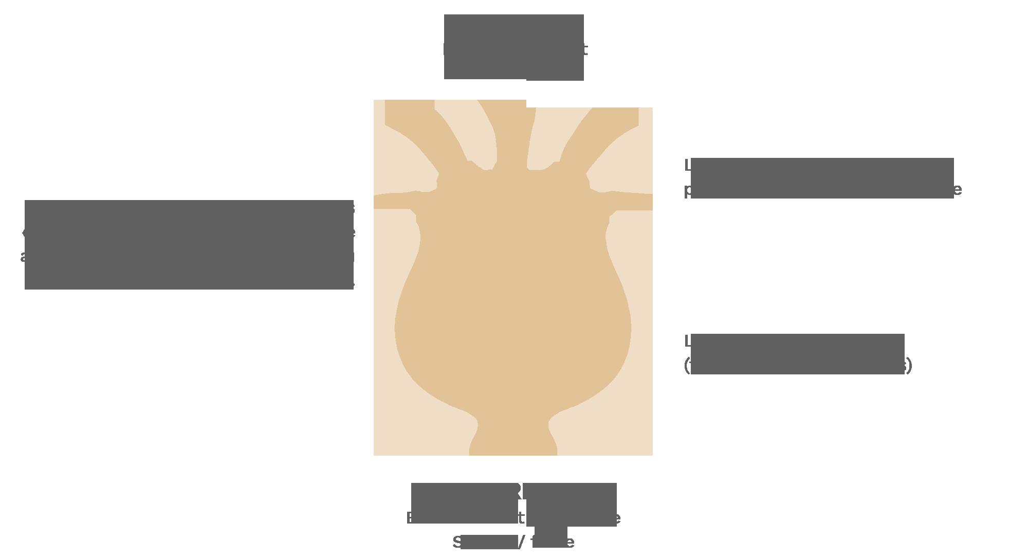 Charte graphique Terre des Chardons